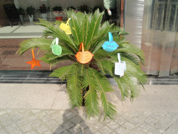 植物心意卡制作图片